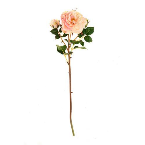 Rosa # 19