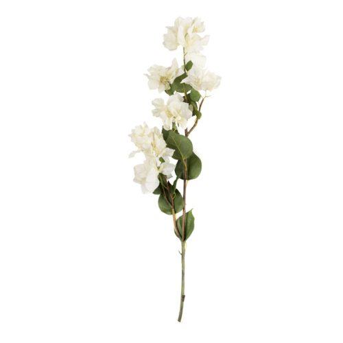 Buganvilia Blanca Larga
