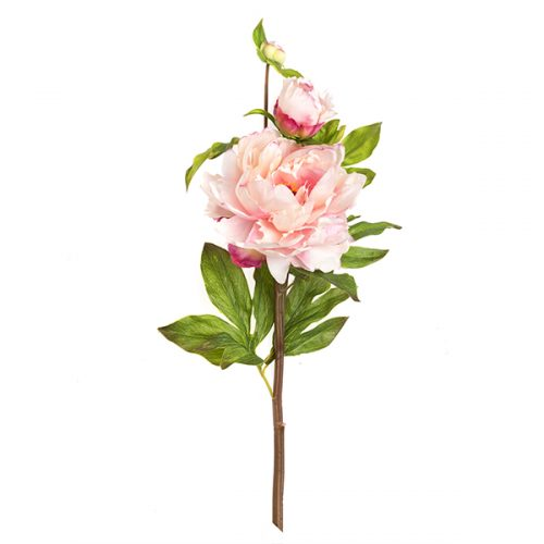Peonia real touch # 5