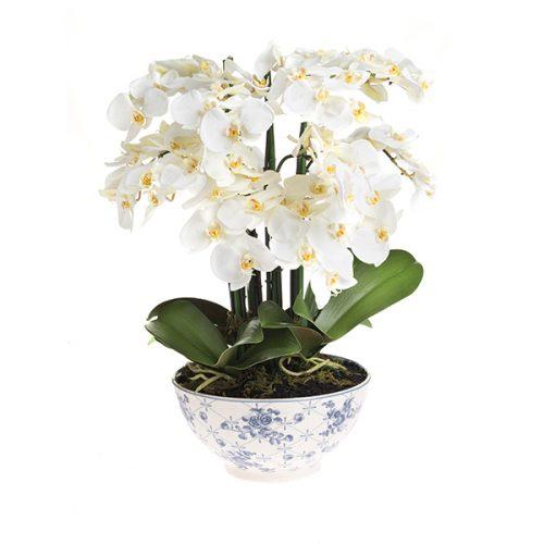 Orquídea # 1