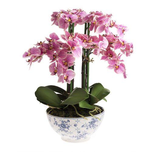 Orquídea # 2