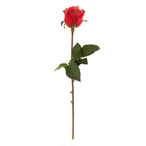 Rosa Roja # 4