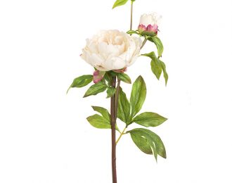Peonia real touch # 6