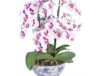 Orquídea # 3